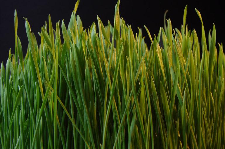 Co robić, aby mieć piękny trawnik w ogrodzie?
