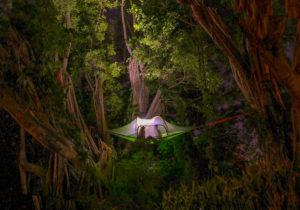 namioty na drzewach