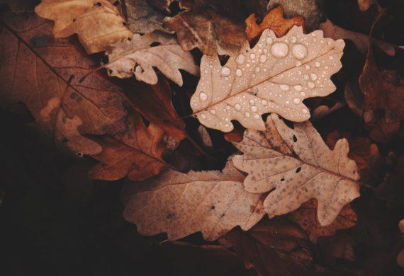 pexels-photo-688830
